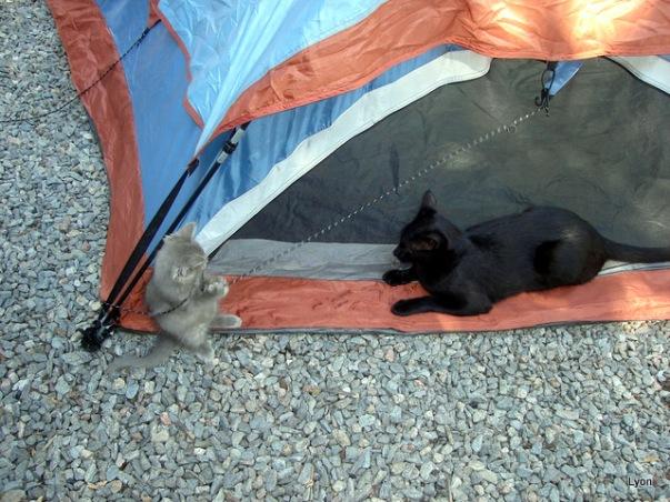 Mei y Pipo acampando!!!